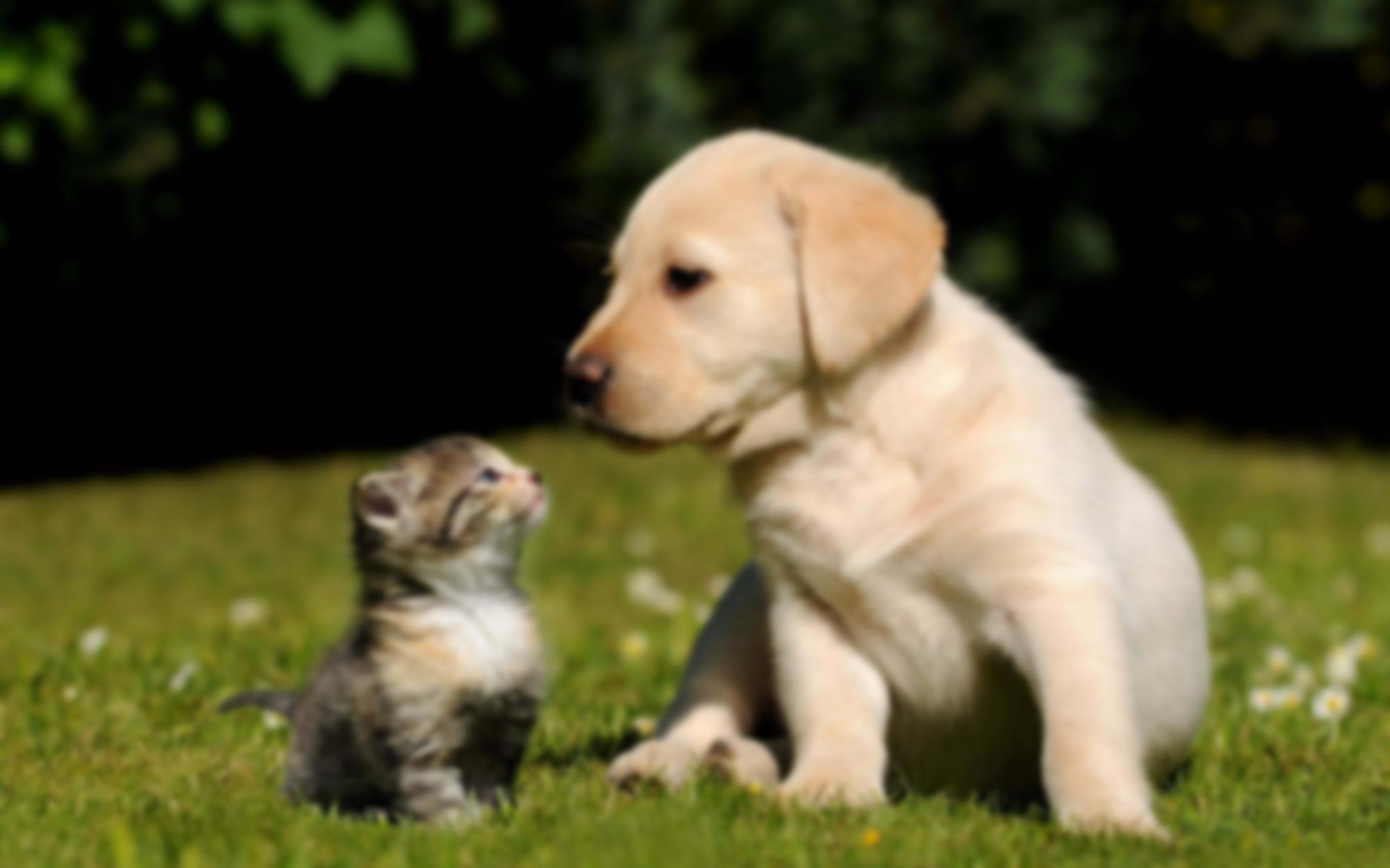 Minimal cucciolibg